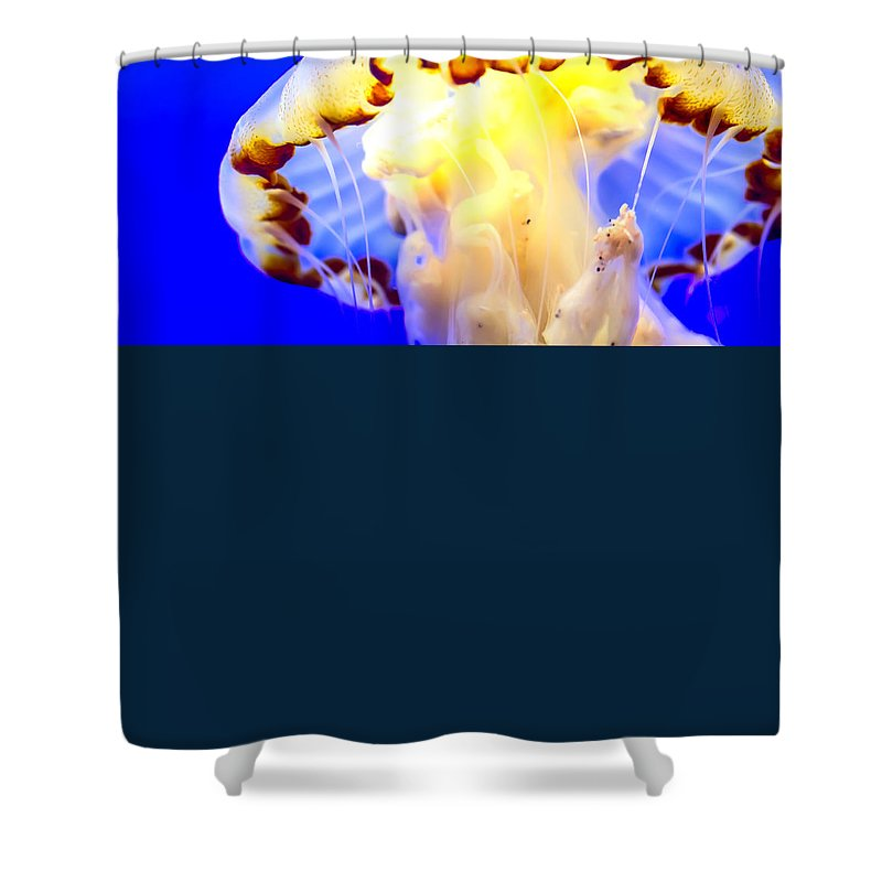 Animal Shower Curtain featuring the photograph Jelly Fish by Jijo George