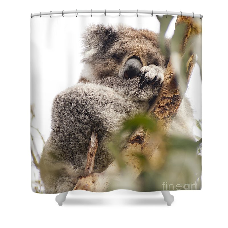 Australia Shower Curtain featuring the photograph Koala by Tim Hester