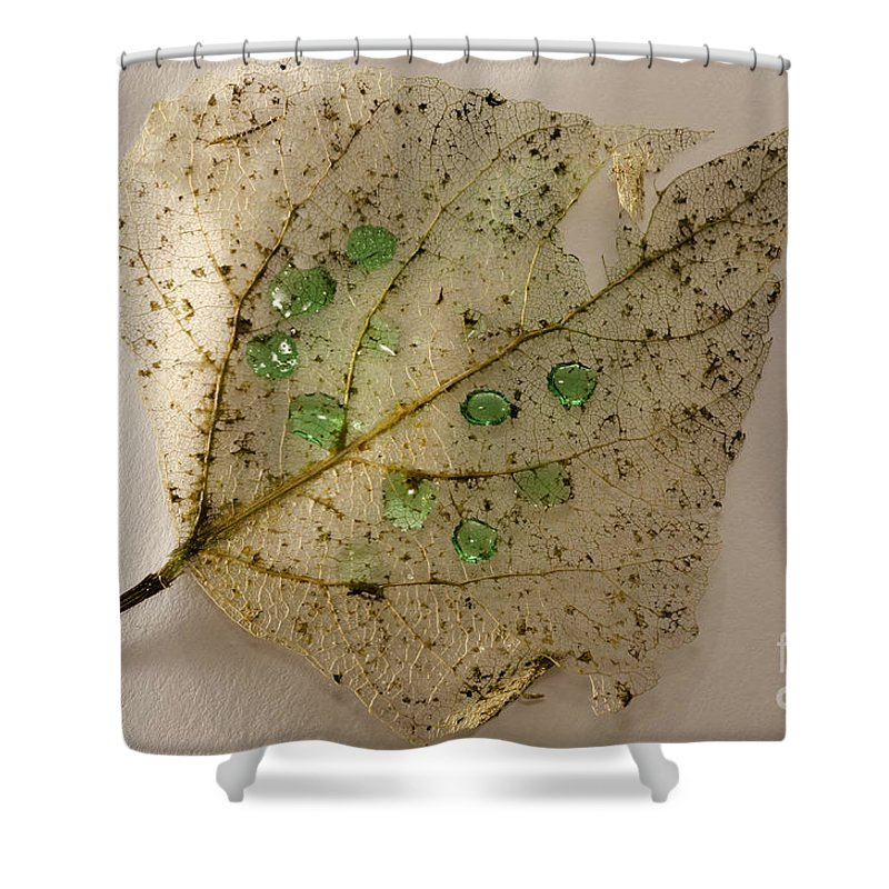 Leaf Shower Curtain featuring the photograph Leaf by Mats Silvan