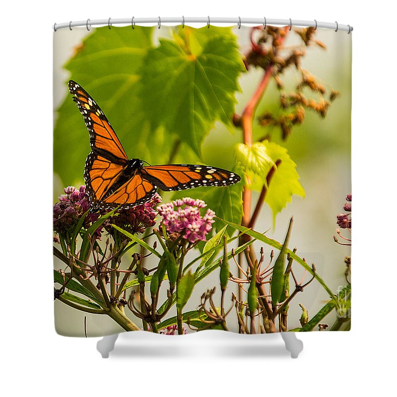 Monarch Shower Curtain featuring the photograph Monarch Butterfly by Brad Marzolf Photography