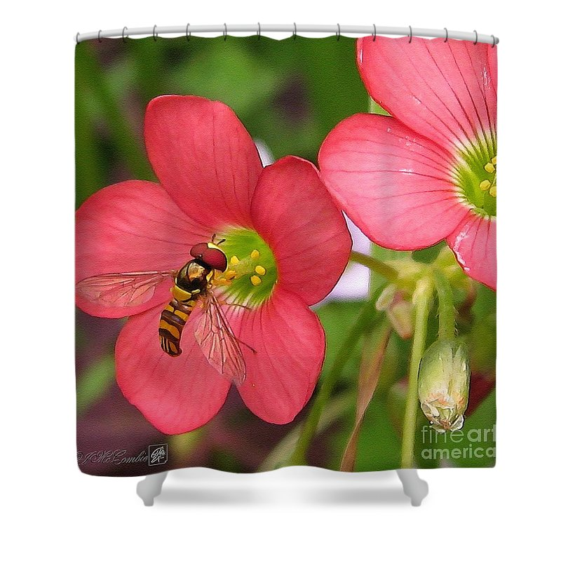 Oxalis Deppei Shower Curtain featuring the painting Oxalis Deppei Named Iron Cross by J McCombie