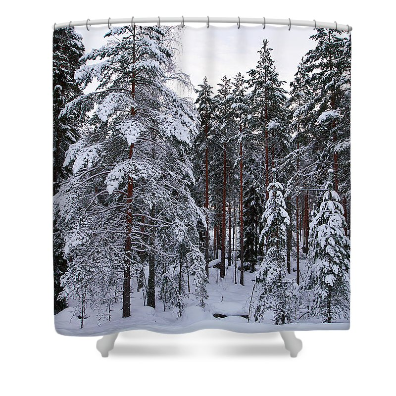 Lehto Shower Curtain featuring the photograph Pine Forest Winter by Jouko Lehto