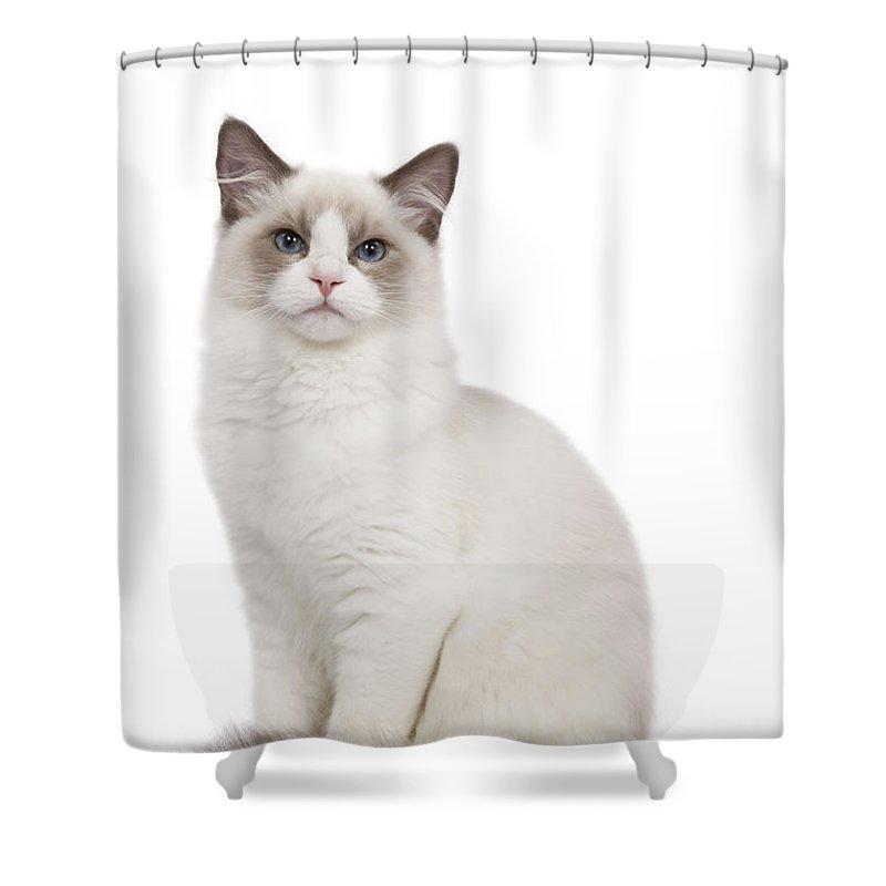 Ragdoll Cat Shower Curtain for Sale by Jean-Michel Labat