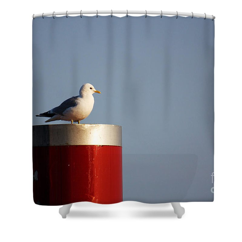 Afternoon Shower Curtain featuring the photograph Seagull Perched On Red Column by Jannis Werner