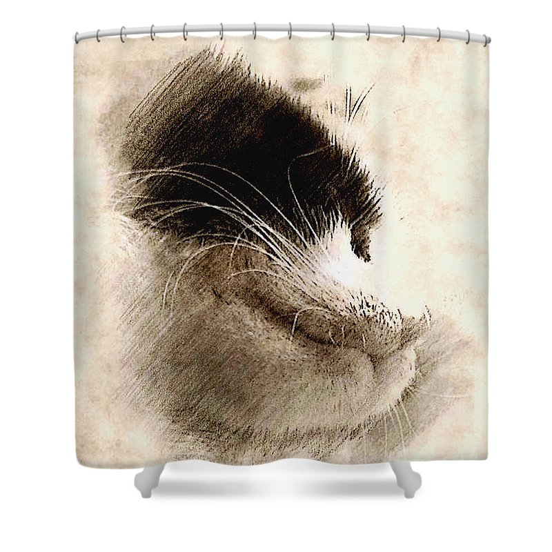 Cat Art Shower Curtain featuring the mixed media Snooze by Binka Kirova