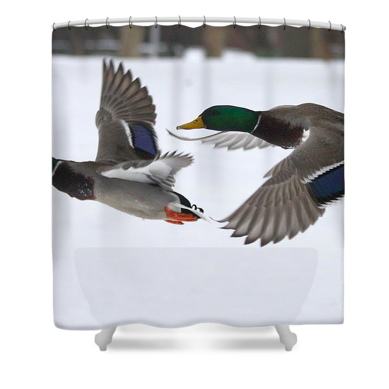 The Great Race Shower Curtain featuring the photograph The Great Race by John Telfer