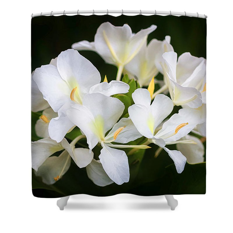 White Ginger Flowers H Coronarium Painted Shower Curtain For Sale By
