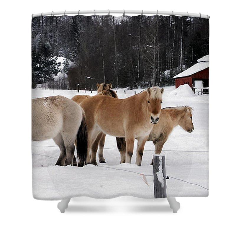 Norwegian Shower Curtain featuring the photograph 40104-5 Norwegian Horses by Albert Seger