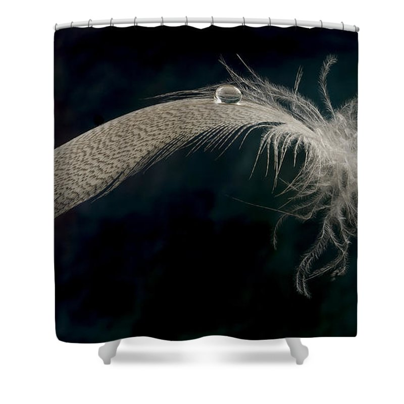 Wood Duck Shower Curtain featuring the photograph Balancing Act by Jean Noren