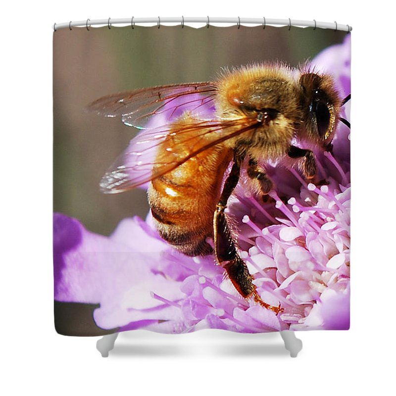 Becky Furgason Shower Curtain featuring the photograph #lucywaspretty by Becky Furgason