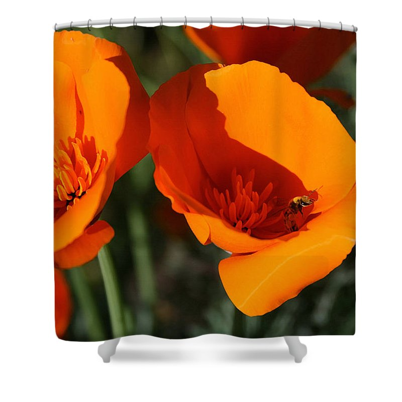 California Poppies Shower Curtain featuring the painting California Poppies by Ellen Henneke