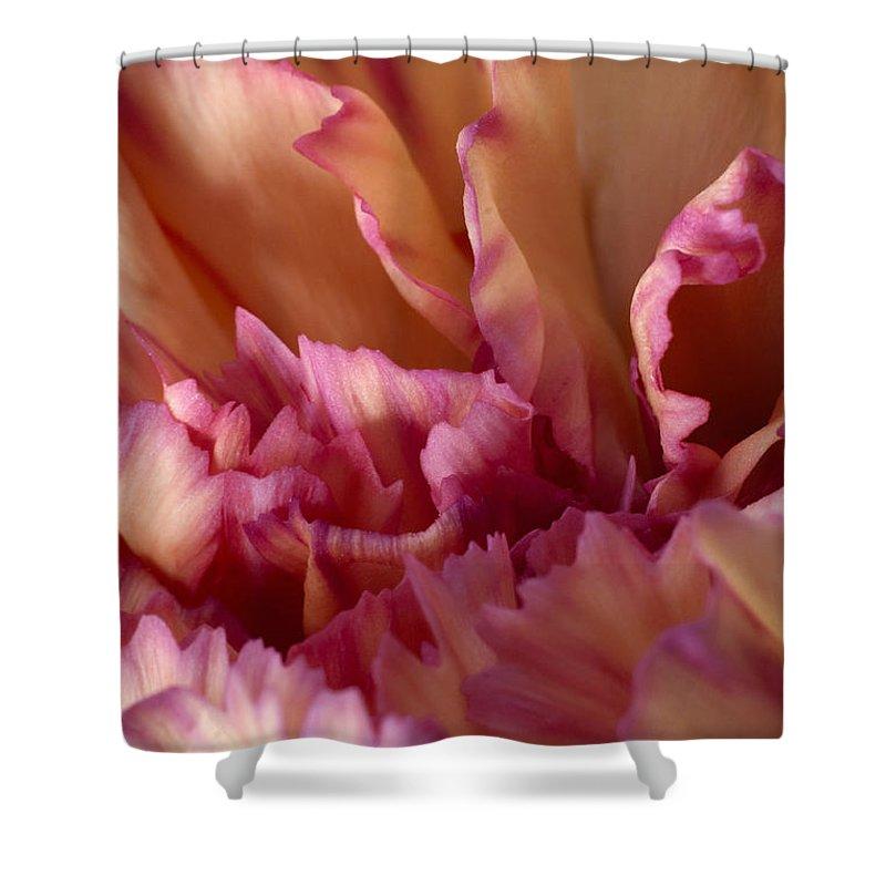 Carnation Shower Curtain featuring the photograph Carnation by Daniel Csoka