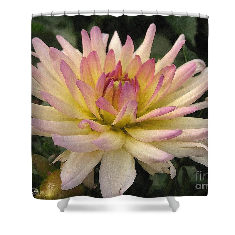 Dahlia Shower Curtain featuring the painting Dahlia Named Camano Ariel by J McCombie