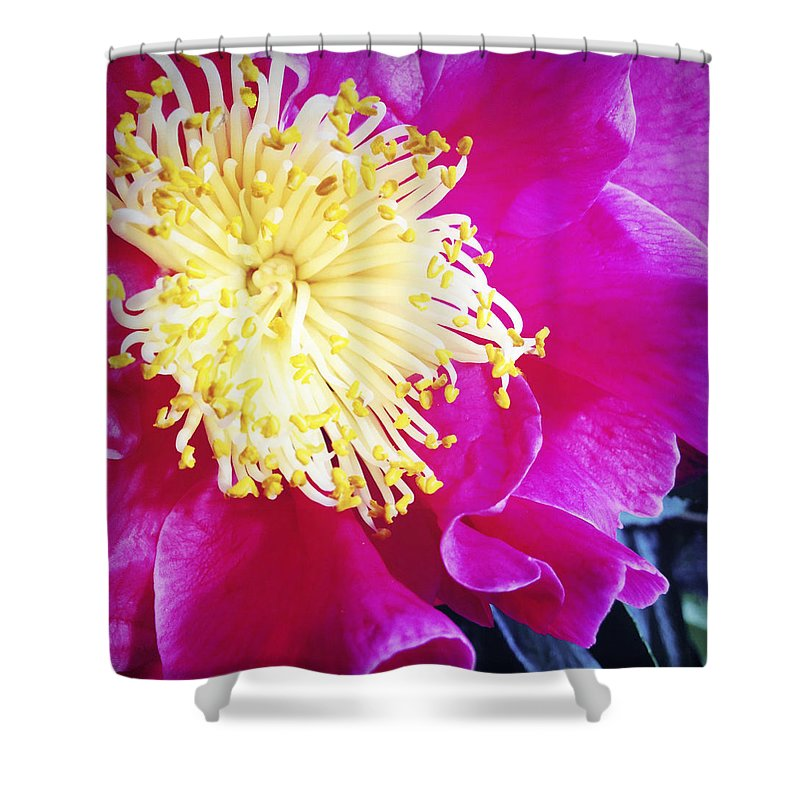 Pink Shower Curtain featuring the photograph Flower by Les Cunliffe