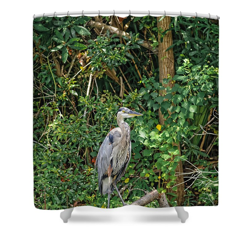Animal Shower Curtain featuring the photograph Great Blue Heron by Peter Lakomy