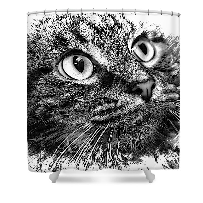 Tabby Shower Curtain featuring the photograph Love Me by Joyce Baldassarre