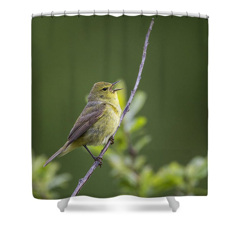 Doug Lloyd Shower Curtain featuring the photograph Orangecrowned Warbler by Doug Lloyd