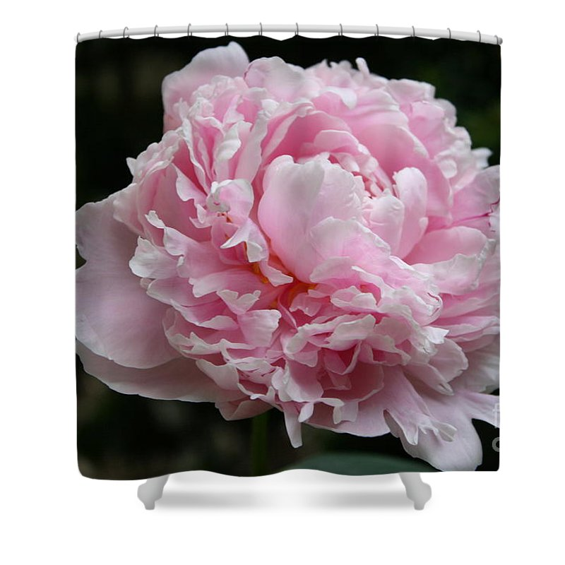 Peonies Shower Curtain featuring the photograph Pink Peony by Christiane Schulze Art And Photography