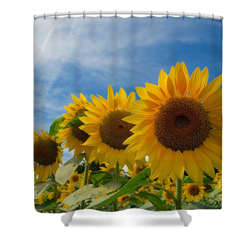 Clear Shower Curtain featuring the photograph Sunflower by Mark Dodd