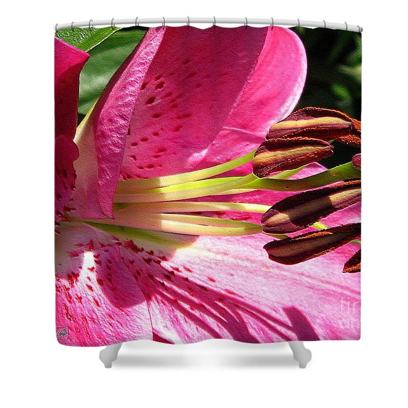 Dwarf Shower Curtain featuring the photograph Dwarf Oriental Lily Named Farolito by J McCombie