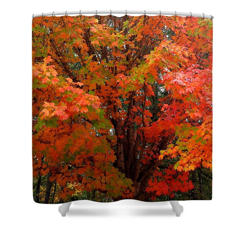 Fall Shower Curtain featuring the photograph Fall Explosion Of Color by Kenny Glover