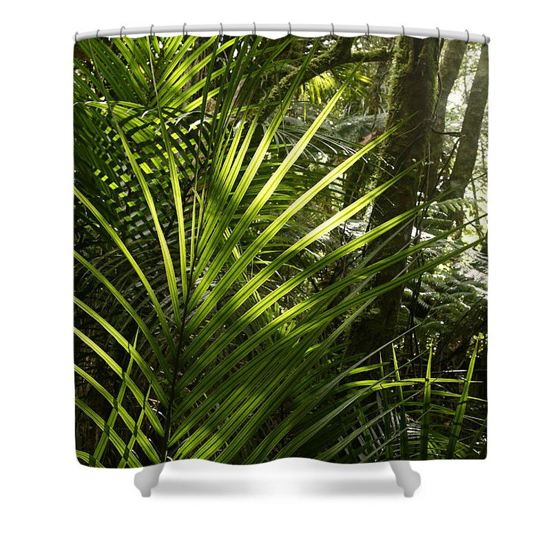 Rain Forest Shower Curtain featuring the photograph Jungle Light by Les Cunliffe