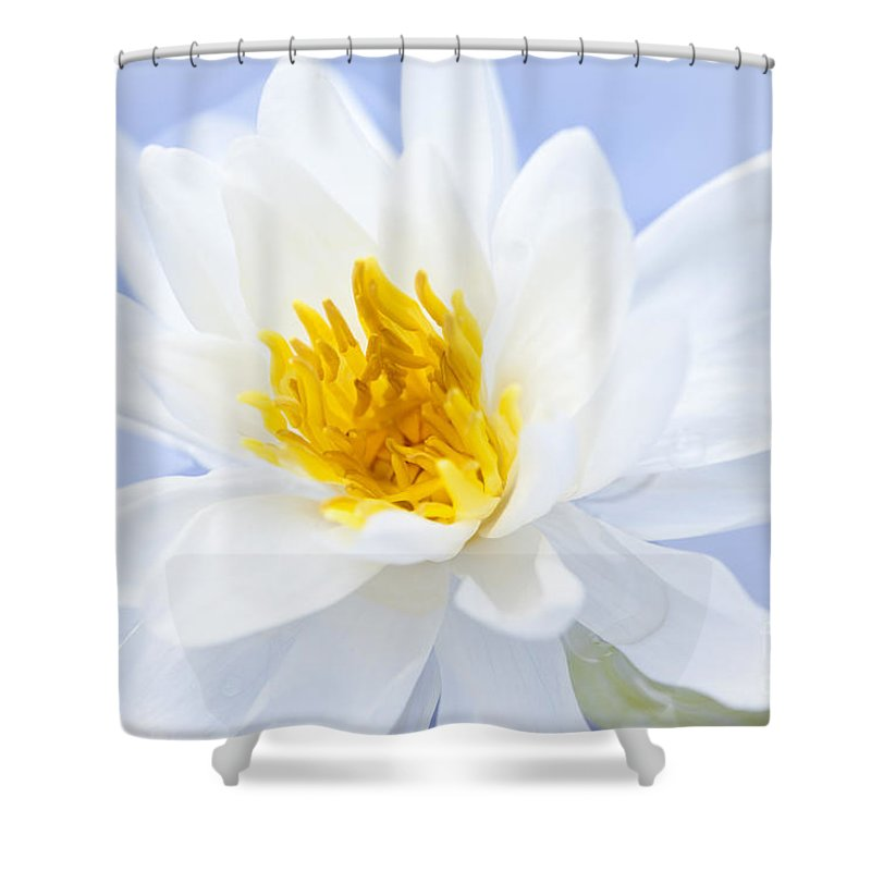 Lotus Shower Curtain featuring the photograph Lotus Flower by Elena Elisseeva
