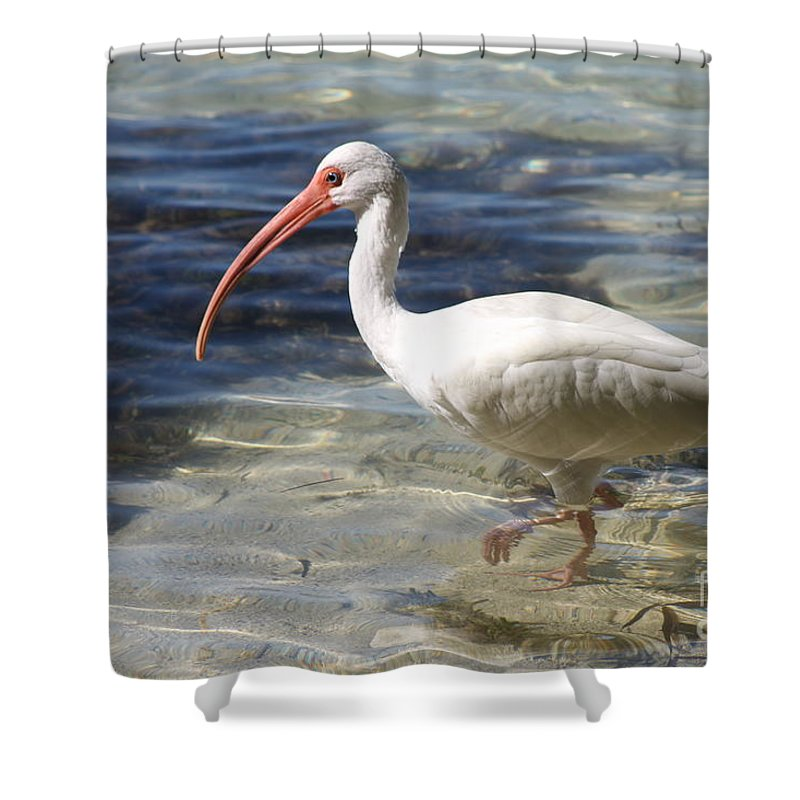 Ibis Shower Curtain featuring the photograph White Ibis by Christiane Schulze Art And Photography