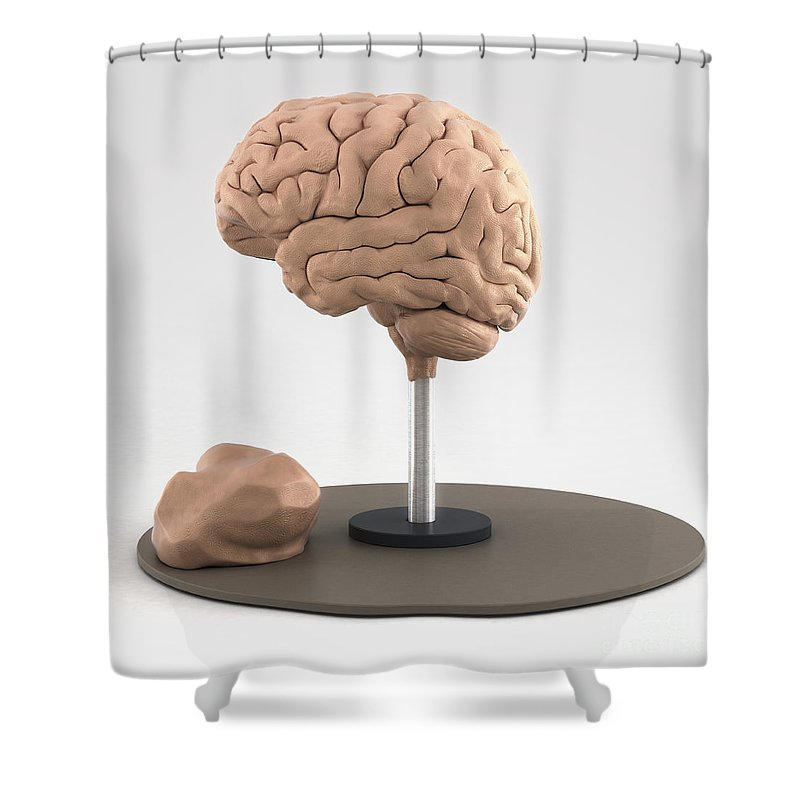 Digital Illustration Shower Curtain Featuring The Photograph Clay Model Of Brain By Science Picture Co