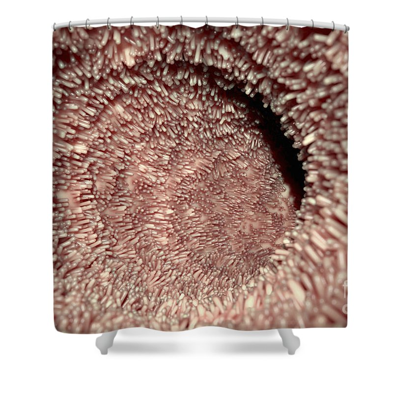 Intestinal Villi Shower Curtain For Sale By Science Picture Co