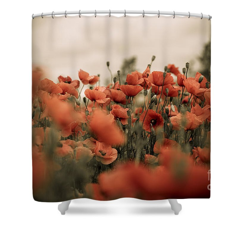 Poppy Shower Curtain featuring the photograph Red Poppy Flowers 7 by Nailia Schwarz