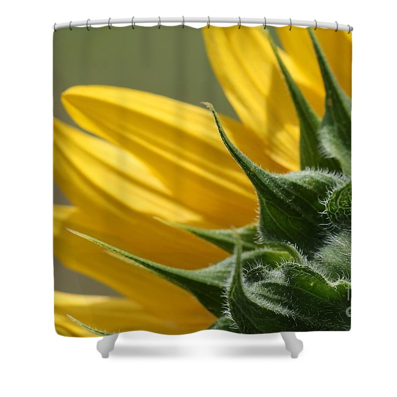 Mccombie Shower Curtain featuring the photograph Sunflower From The Color Fashion Mix by J McCombie