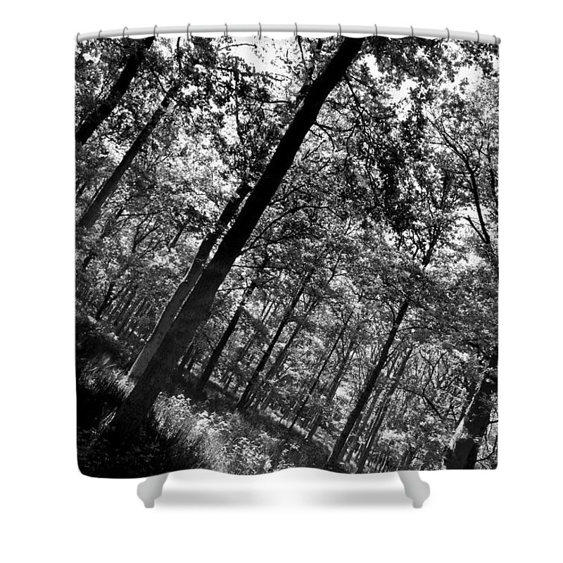 Tree Shower Curtain featuring the photograph The Forest by David Pyatt