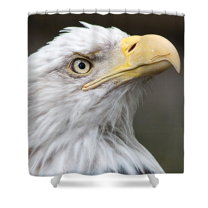 Bald Eagle Shower Curtain featuring the photograph Bald Eagle by Gaurav Singh