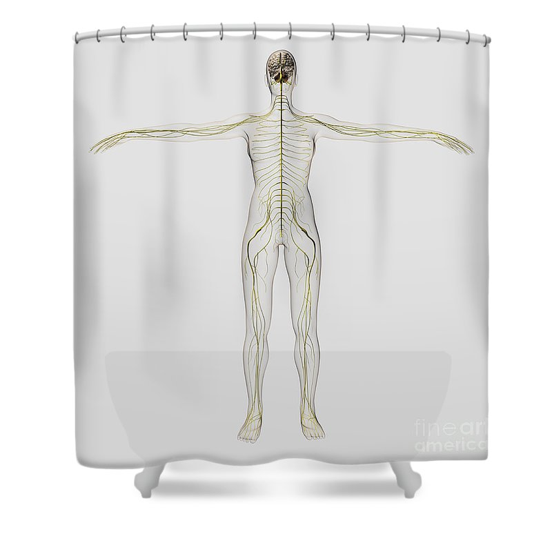 Color Image Shower Curtain Featuring The Digital Art Medical Illustration Of Human By Stocktrek Images