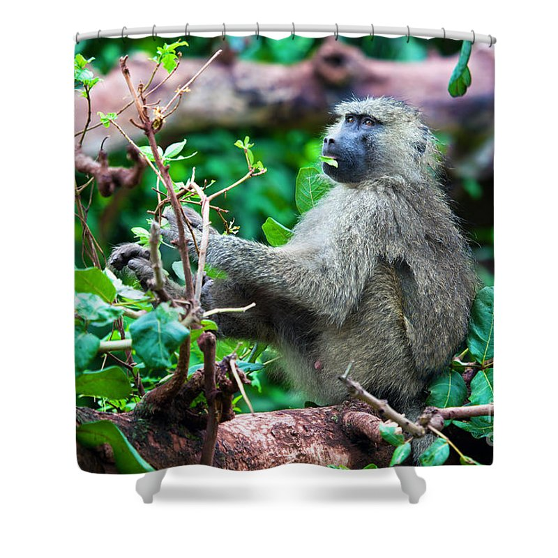 Baboon Shower Curtain featuring the photograph A Baboon In African Bush by Michal Bednarek