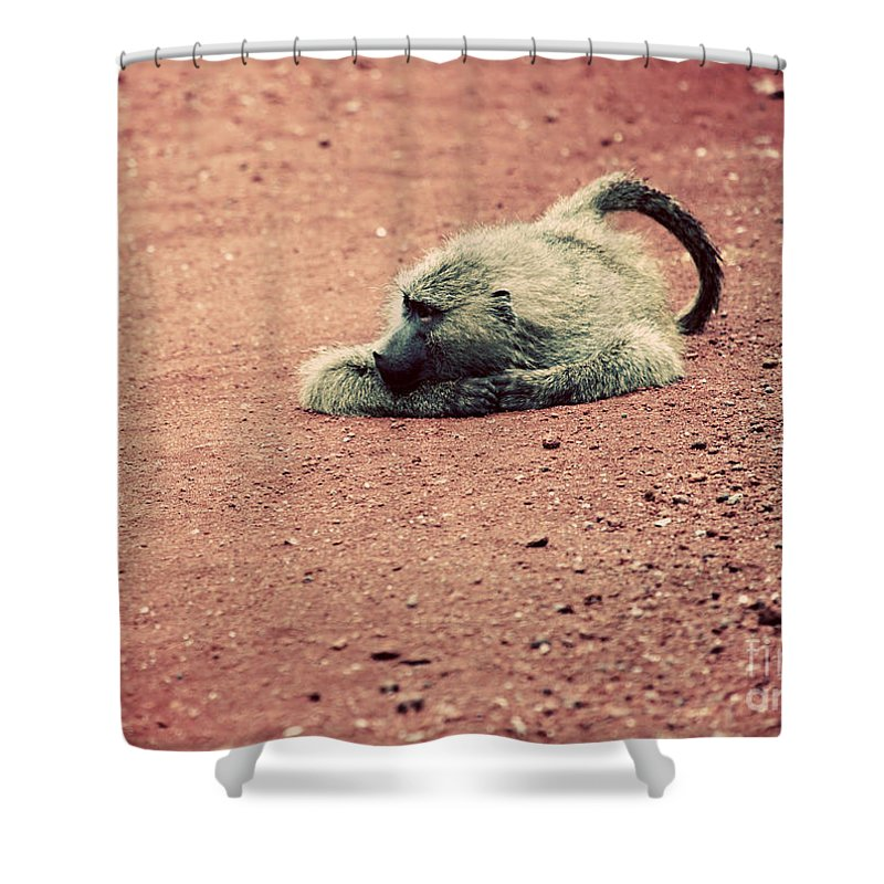Baboon Shower Curtain featuring the photograph A Baboon On African Road by Michal Bednarek