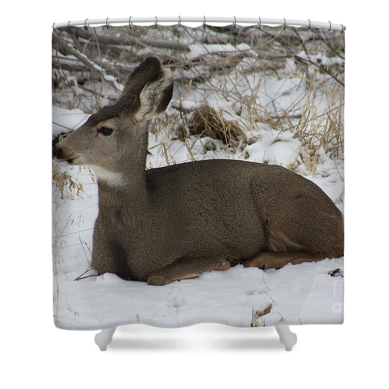 Deer Shower Curtain featuring the photograph A Bed Of Snow by Brandi Maher