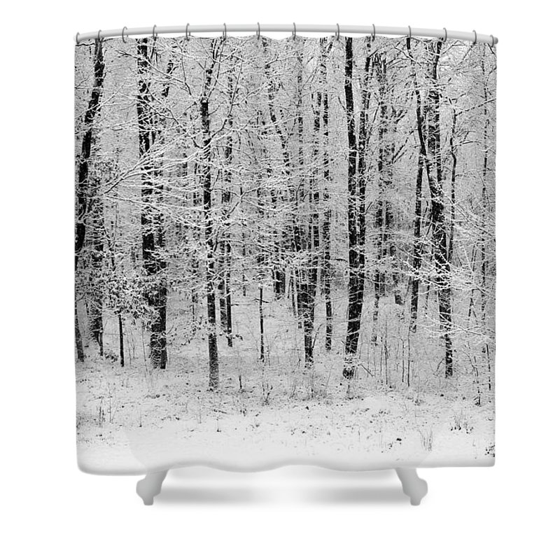 Landscape - B&w Fresh Blanket Of Snow Resting In The Woods - Gives Tranquility To Your Home And Office Shower Curtain featuring the photograph Virgin Snow by Ursula Coccomo