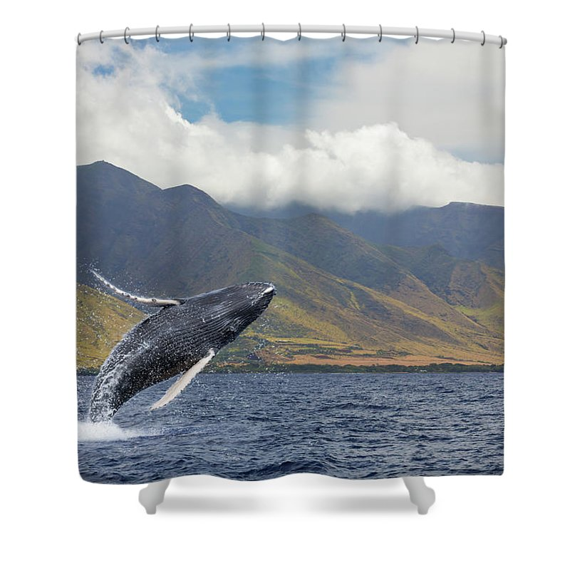 Animals In The Wild Shower Curtain featuring the photograph A Breaching Humpback Whale Megaptera by Dave Fleetham