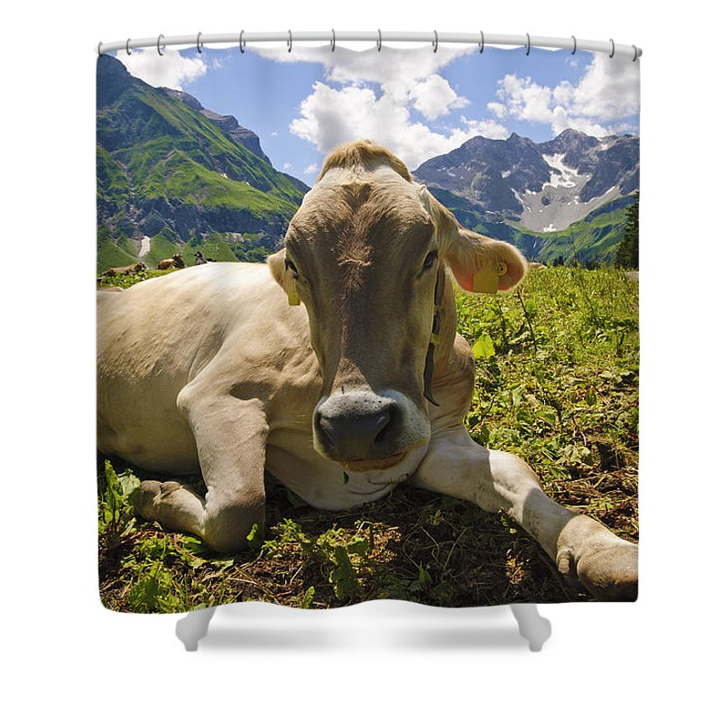 Mountain Shower Curtain featuring the photograph A Calf In The Mountains by Chevy Fleet