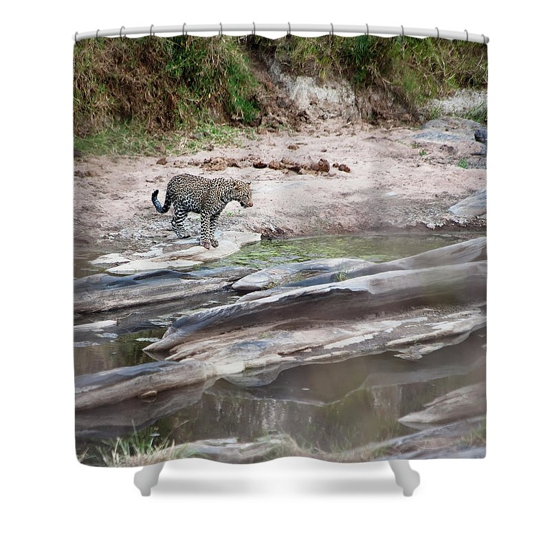 Tranquility Shower Curtain featuring the photograph A Cheetah Stands At The Edge Of The by Diane Levit / Design Pics