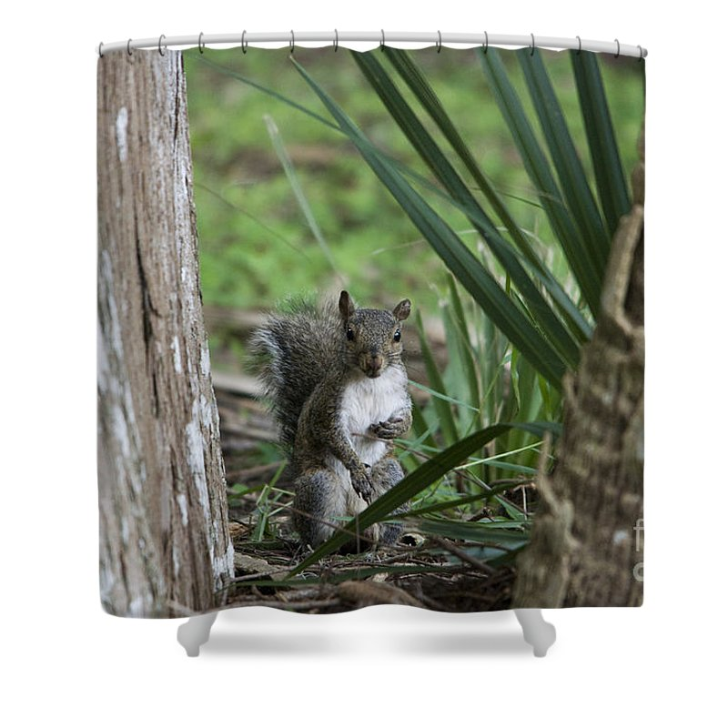 Squirrel Shower Curtain featuring the photograph A Curious Squirrel by John Greco