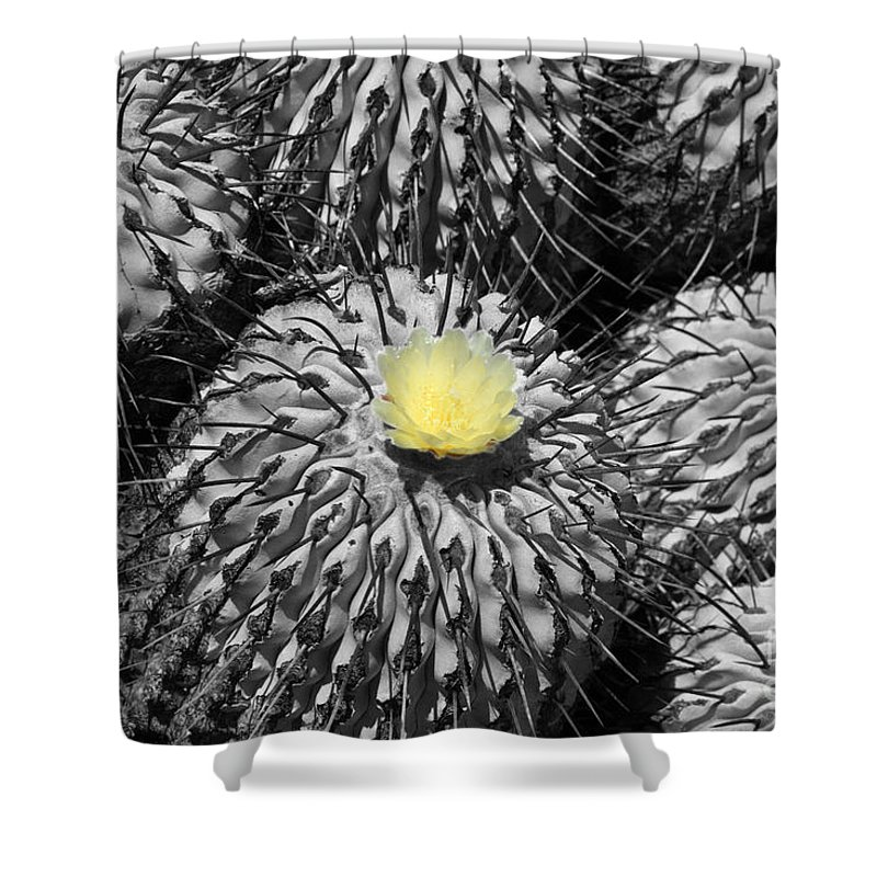 Copiapoa Shower Curtain featuring the photograph A Flower Among Thorns by James Brunker