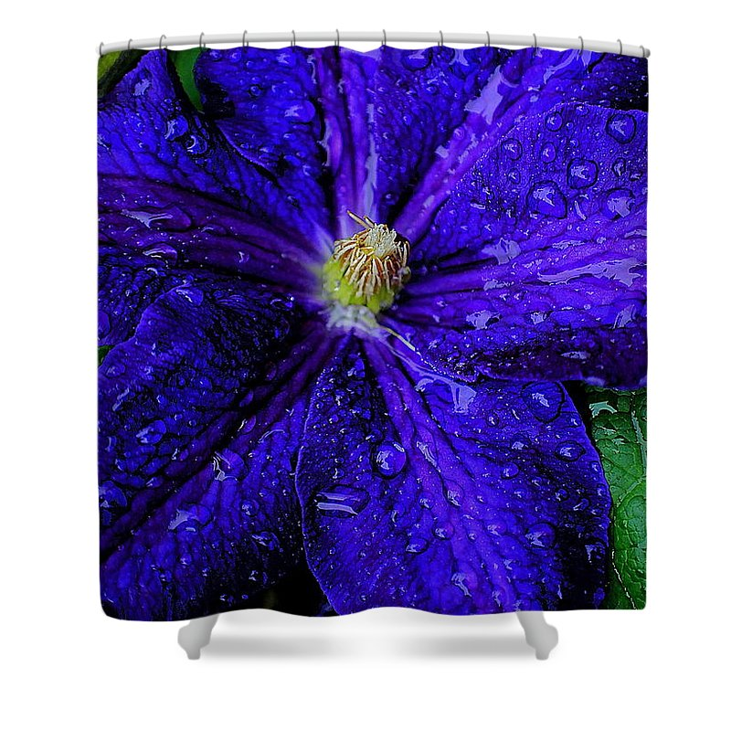 Flower Shower Curtain featuring the photograph A Gentle Rain by Frozen in Time Fine Art Photography