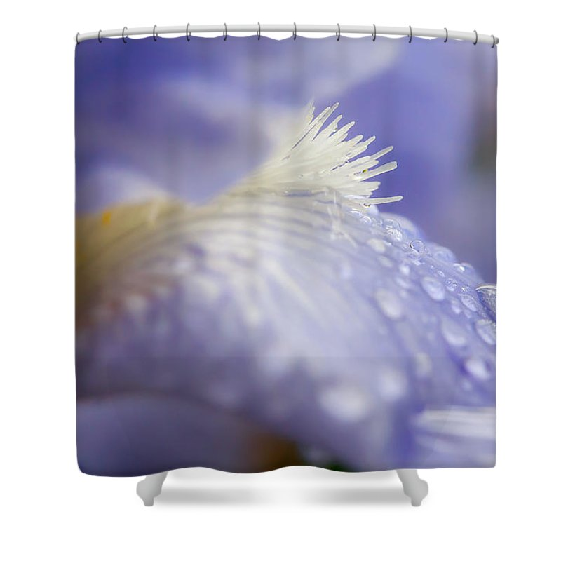 Bearded Siberian Iris Shower Curtain featuring the photograph A Glimpse Of Beauty by Sabine Edrissi
