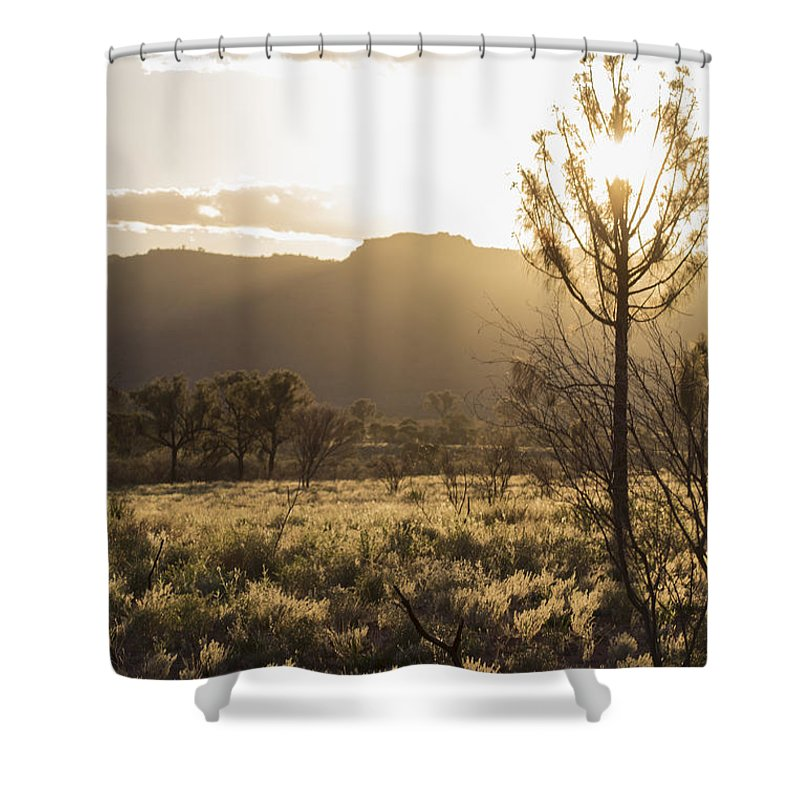 Morning Shower Curtain featuring the photograph A Golden Morning by Linda Lees
