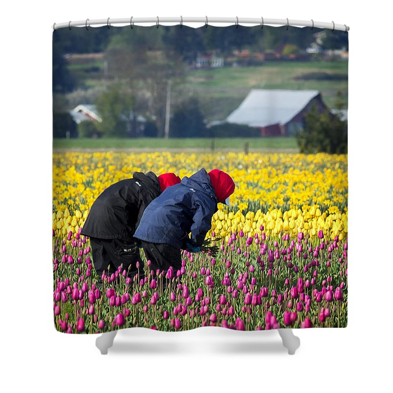 Picking Shower Curtain featuring the photograph A Hard Day's Work by Bob Stevens