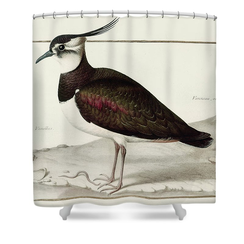 Lapwing Shower Curtains