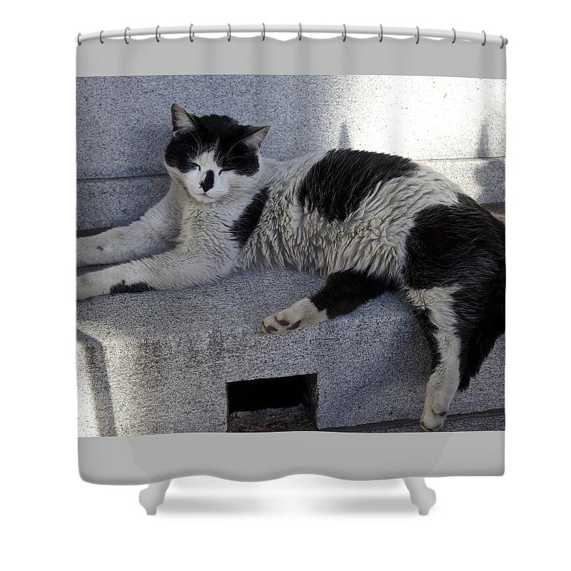 Cat Shower Curtain featuring the photograph A Lazy Afternoon by Venetia Featherstone-Witty